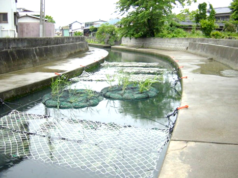 浜名湖水質浄化